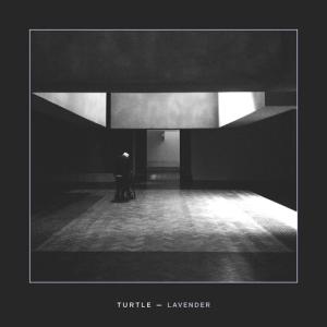 Turtle-Lavender